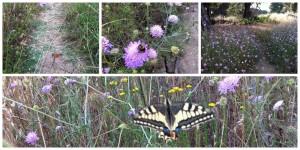 farfalle e non solo