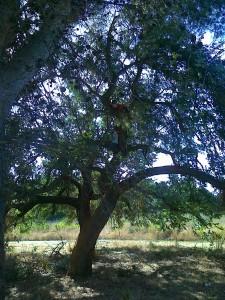 bimbi sull'albero del Drago