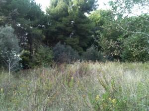 vegetazione mista nel parco del Dragone