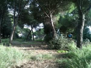 scorcio pineta del parco del Dragone