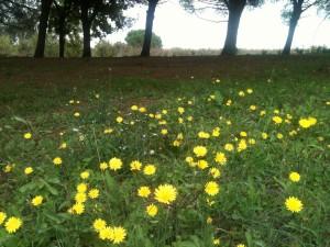 fiori nel giardino nel parco del dragone