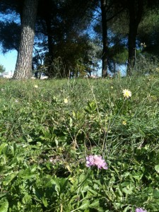prato fiorito nel Parco del Dragone