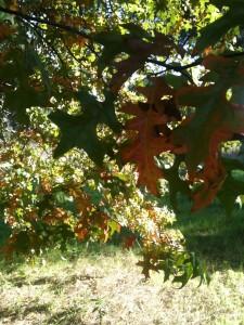 autunno nel parco del Dagone