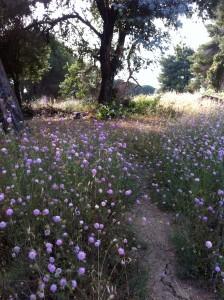 giardino delle farfalle nel parco del Dragone