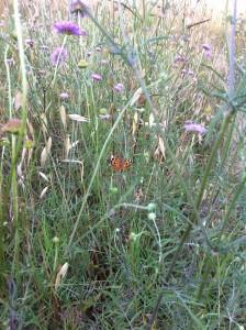 farfalla nel parco del Dragone