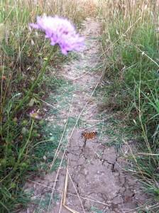 farfalla nel sentiero del Drago