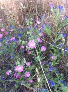 fiori di campo nel parco del Dragone